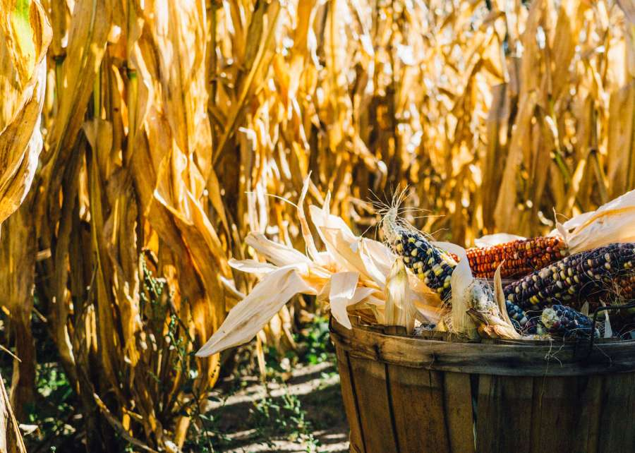 What Mabon means - mabon blessings and ideas